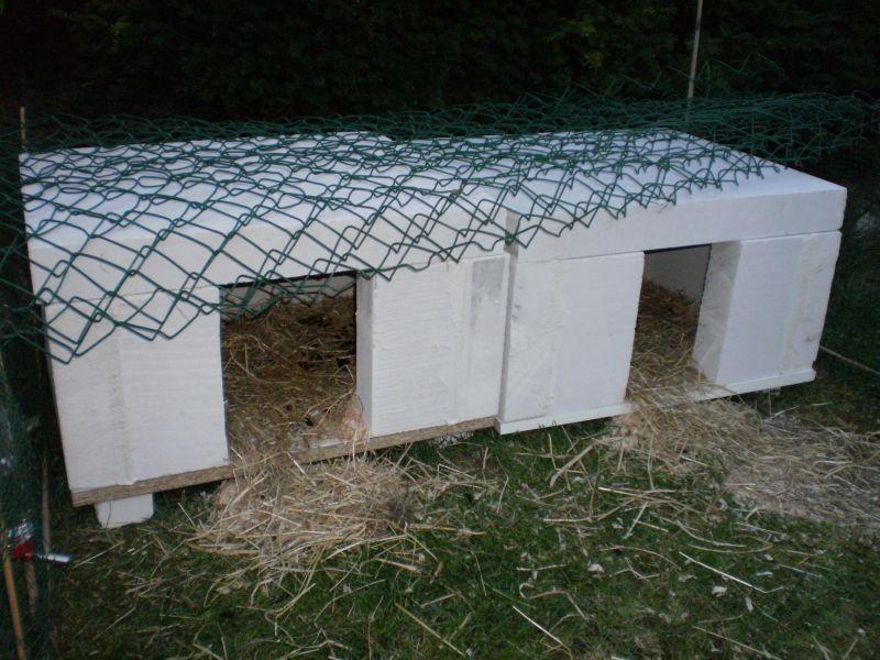Cochon d inde d amour - Sol en beton cellulaire ...
